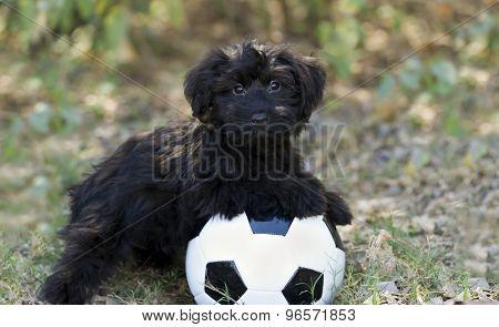 Cute Puppy Ball