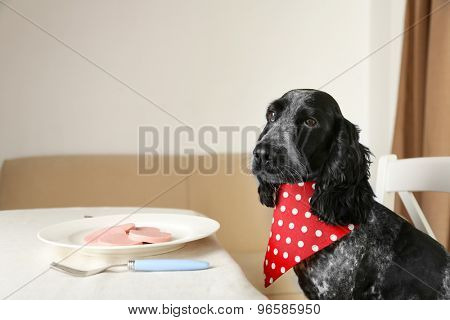 Dog looking at plate of sliced sausage on dining table