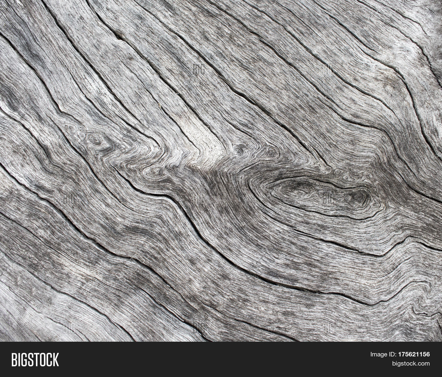 Silver Wood Background Wooden Texture Close Up Photo White Old Tree Near The Sea