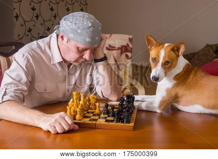 Smart basenji dog waiting for the master next move in a chess family tournament