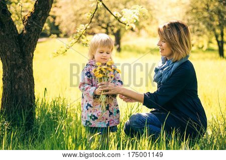 Portrait of happy family of two people on vacation with bouquet of dandelions. Young mother and little daughter having fun under blooming apple tree in spring garden. Age of child 2 years and 4 month.