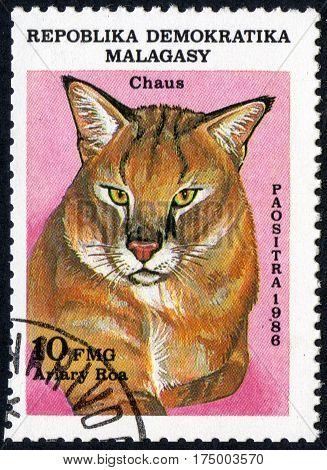UKRAINE - CIRCA 2017: A stamp printed in Malagasy Madagascar shows Swamp cat Chaus Ariary Roa circa 1986