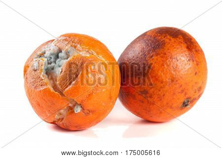 one moldy tangerine isolated on white background.