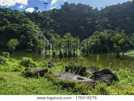 Mangrove forest and tropical lake between mountains. Rare botanical species of exotic nature. Green swamp water with trees. Disappearing ecosystem of mangrove forest. Green and blue peaceful scene
