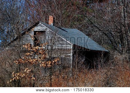 Old decrepit, creepy wooden cabin overgrown with trees