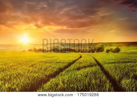 Beuatiful sunset in fields of Moravia, Czech Republic. With light leak and lens flare