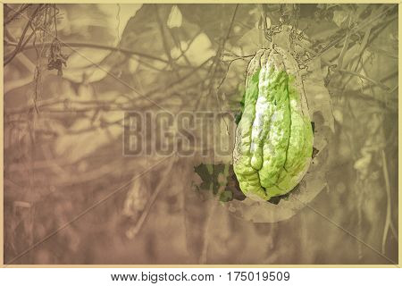 Vegetable plantation in Vietnam. Momordica charantia often called bitter melon, bitter gourd or bitter squash. Modern Painting. Brushed artwork based on photo. Background texture.