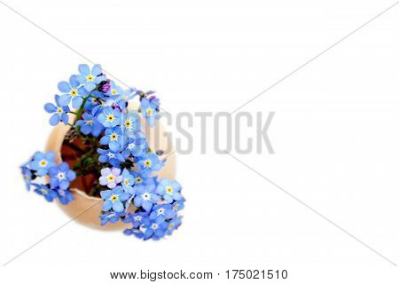 Easter card with blue spring flowers in eggshell