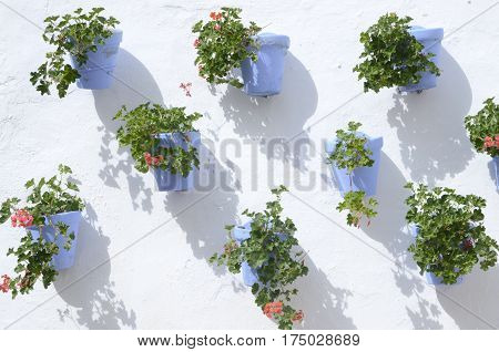 Flowers on blue pots on white wall in Marbella Andalusia Spain