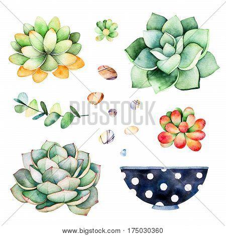Watercolor collection with succulents plants,pebble stones, branche,painted pot.