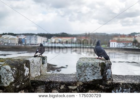 Two doves perched on the battlements of a medieval castle on a rainy winter day near a summer resort in La Coruna Spain (DOF)