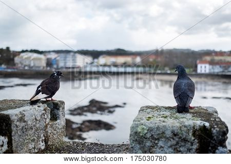 Two Doves Perched On The Battlements Of A Medieval Castle On A Rainy Winter Day Near A Summer Resort