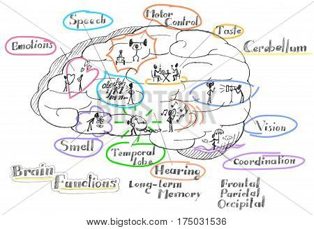 The human brain hemisphere functions vector illustration