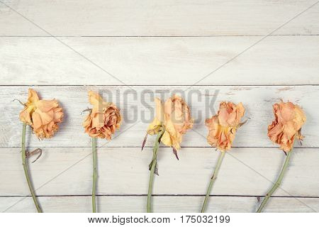 Five dried yellow roses on old white wooden backgroud