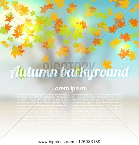 Autumn vector background with colored maple leaves. Changing seasons illustration. Banner card poster. Stock vector illustration