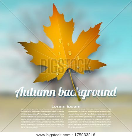 Colorful vector autumn maple leaf with raindrops on blurred abstract background. Illustration onset of autumn. Design element for advertising wallpaper banner. Stock vector illustration