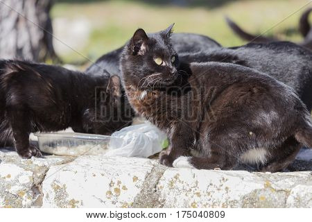 black cat eating togheter in the farm