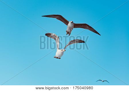 Flying Seagulls On The Blue Sky