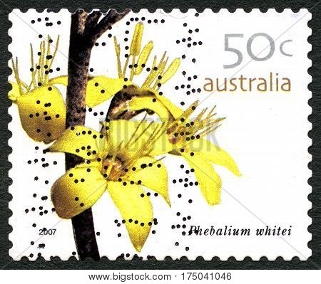 AUSTRALIA - CIRCA 2005: A used postage stamp from Australia depicting an image of a Phebalium Whitei flower circa 2005.