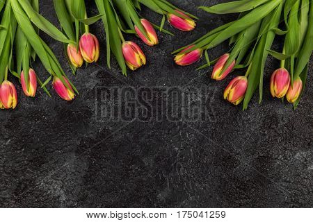 Tulips on darken concrete background for Mother's Day, spring time or Easter theme.