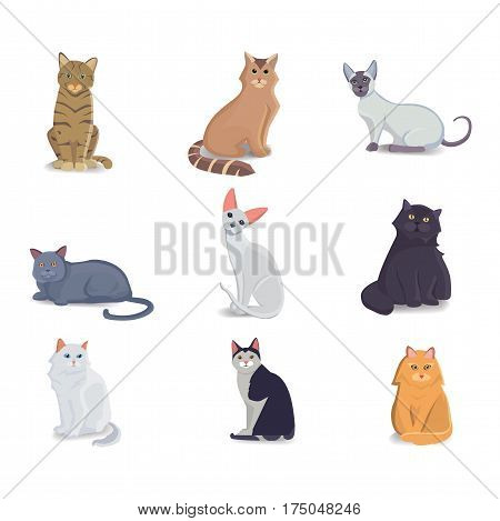 Collection Cats of Different Breeds. Vector isolated cat on white background