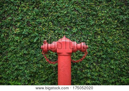 Red fire hydrant on the green hedgerow background. Closeup. Horizontal.