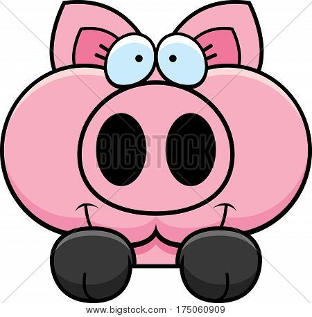 Cartoon Pig Peeking