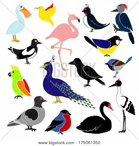 Different birds isolated on white background. Hummingbird colibri titmouse bullfinch parrot pelican flamingo woodpecker swan magpie swallow crows cranes peacock pigeon.