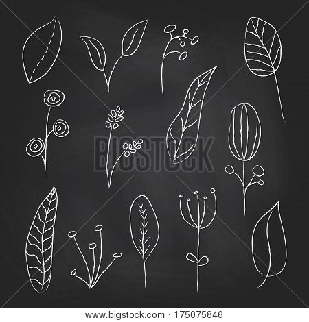 A collection of hand drawn delicate decorative vintage leaves in chalkboard background. Vector illustration.