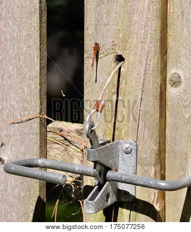 Dragon Fly with Wooden Fence and Gate Latch