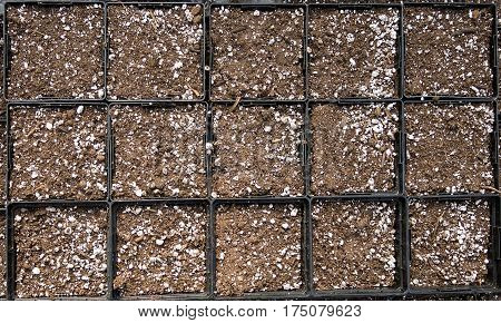 Seed trays for planting seeds in the spring