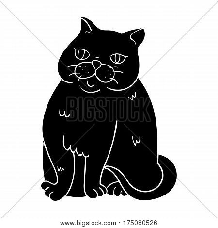 Exotic Shorthair icon in black design isolated on white background. Cat breeds symbol stock vector illustration.