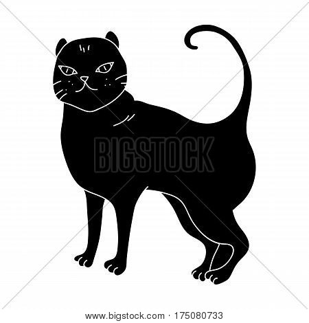 British Shorthair icon in black design isolated on white background. Cat breeds symbol stock vector illustration.