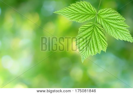 Green leaf isolated on a vibrant blurry green yellow bokeh background