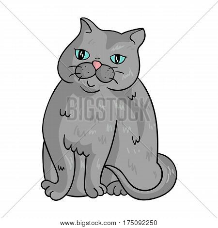 Exotic Shorthair icon in cartoon design isolated on white background. Cat breeds symbol stock vector illustration.