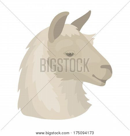 Lama icon in cartoon design isolated on white background. Realistic animals symbol stock vector illustration.