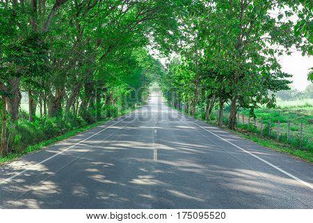 Road Summer Country Road Single Line Multiple Lane Highway
