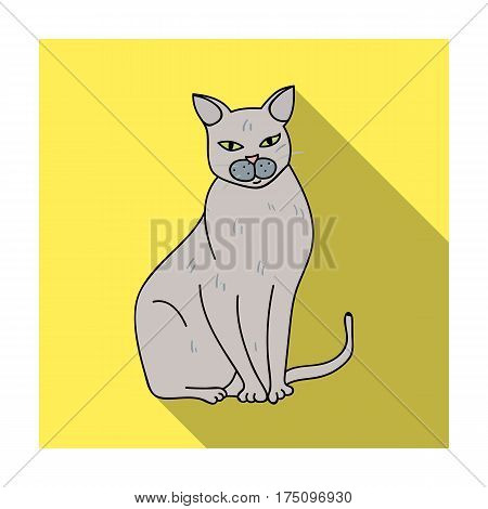 Chartreux icon in flat design isolated on white background. Cat breeds symbol stock vector illustration.
