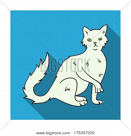 British Semi-longhair icon in flat design isolated on white background. Cat breeds symbol stock vector illustration.