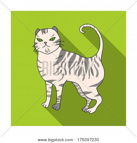 British Shorthair icon in flat design isolated on white background. Cat breeds symbol stock vector illustration.