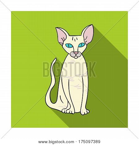 Peterbald icon in flat design isolated on white background. Cat breeds symbol stock vector illustration.