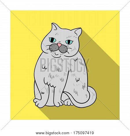 Exotic Shorthair icon in flat design isolated on white background. Cat breeds symbol stock vector illustration.
