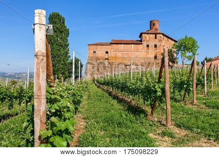 Abandoned medieval castle and green vineyards under blue sky in Piedmont, Northern Italy.
