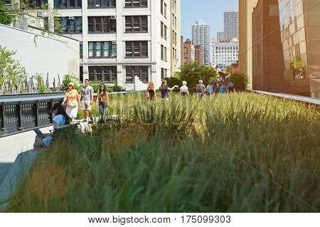Green Grass Park In New York City