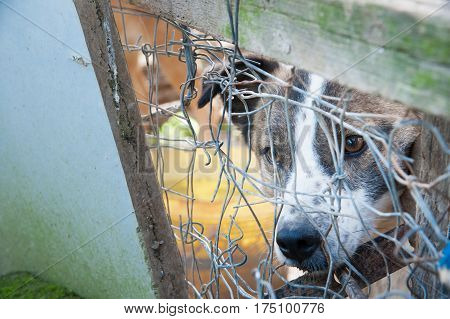 Inside A Dog Refuge