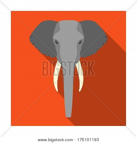 Elephant icon in flat design isolated on white background. Realistic animals symbol stock vector illustration.