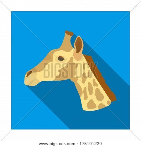 Giraffe icon in flat design isolated on white background. Realistic animals symbol stock vector illustration.