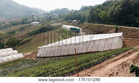 Farm Strawberry Province Nan Thailand./Roadside Rest Area./KHUN SATHAN NATIONAL PARK THAILAND.