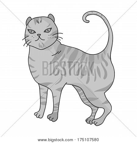 British Shorthair icon in monochrome design isolated on white background. Cat breeds symbol stock vector illustration.