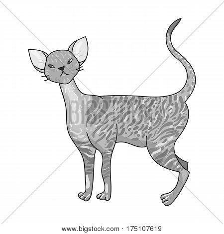 Cornish Rex icon in monochrome design isolated on white background. Cat breeds symbol stock vector illustration.